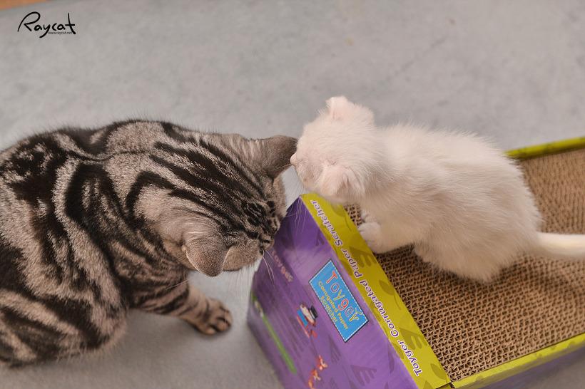 고양이와 동거하는 집에 꼭 필요한 발톱갈이 스크래처