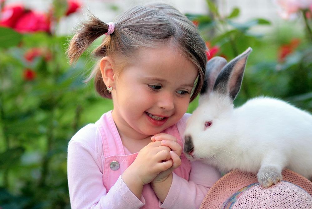 토끼는 가장 높은 매출을 올리는 소동물