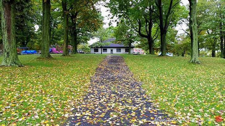 가을 낙엽입니다