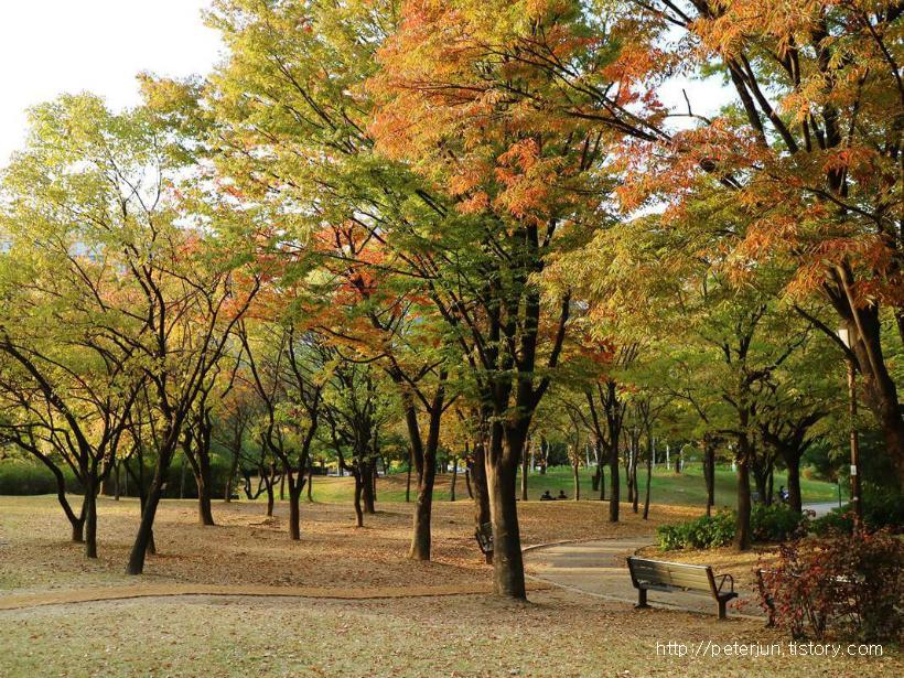 여의도공원 가을 풍경