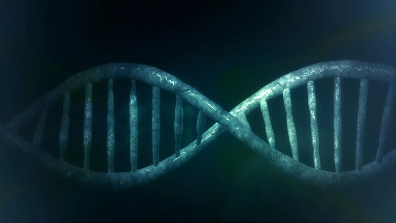 사진: DNA는 두 가닥의 나선구조로 되어 있다. 이때 정보를 잘 유지하는 것은 매우 중요하다.