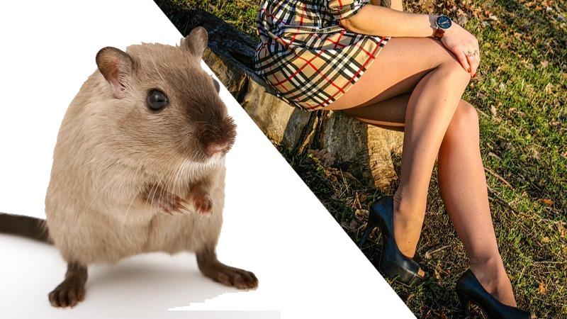 사진: 동물 쥐와 다리에 나는 쥐는 같은 발음이다. 쥐난다는 말의 어원도 같을까?