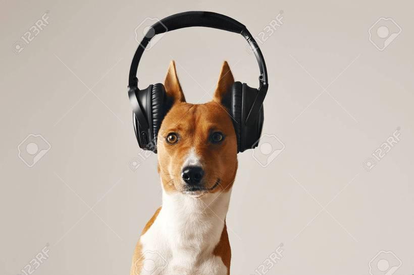 음악듣는 강아지