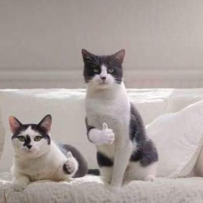 고양이 엄지척