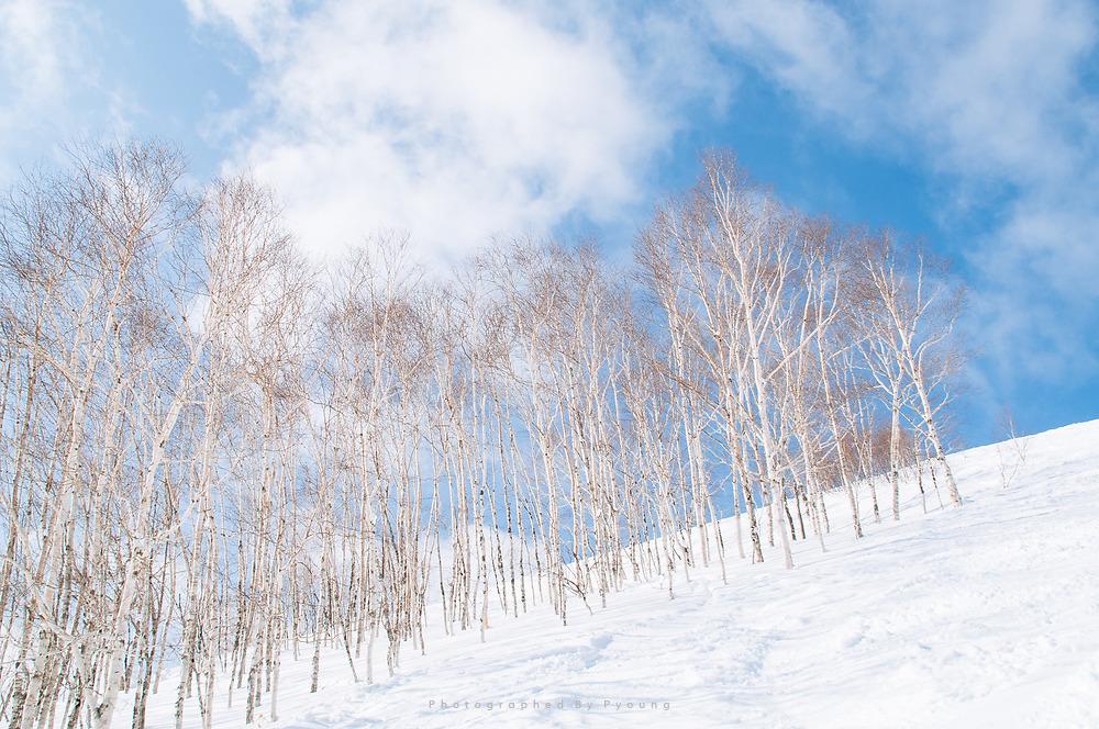 시린 겨울