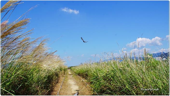 초가을 억새밭 산책로 ..::OmnisLog